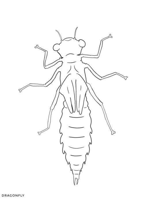 image gallery echinoderm worksheet arthropod coloring pages 1 arthropod coloring page. Black Bedroom Furniture Sets. Home Design Ideas