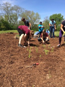 Volunteers foster the growth of native plant species in the park's newest rain garden.