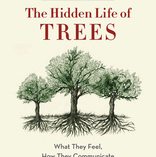 Hidden Life of Trees Book Cover